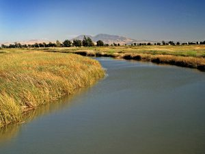 Photo of the Delta with Mt. Diablo in the background by CSLC staff