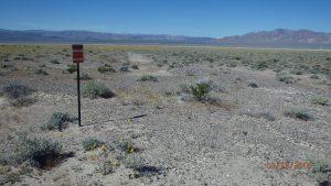 Wildflowers east of Death Valley Junction