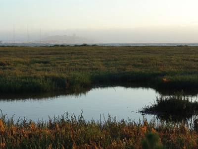 The Emeryville mudflats with San Francisco in the distance