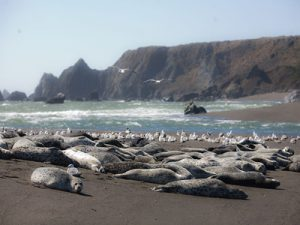 Photo of Harbor Seals on Bodega BayBy David Sifry [CC BY 2.0 (http://creativecommons.org/licenses/by/2.0)], via Wikimedia Commons