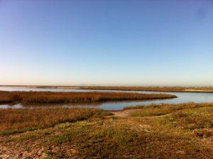 Photo of the Tijuana Estuary