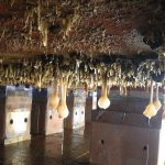 extensive biofouling community on the bottom of a ship hull