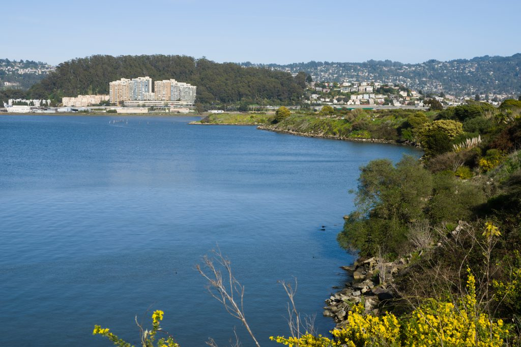 Looking across the water at Albany Hill from the Albany Bulb with the city in the background.