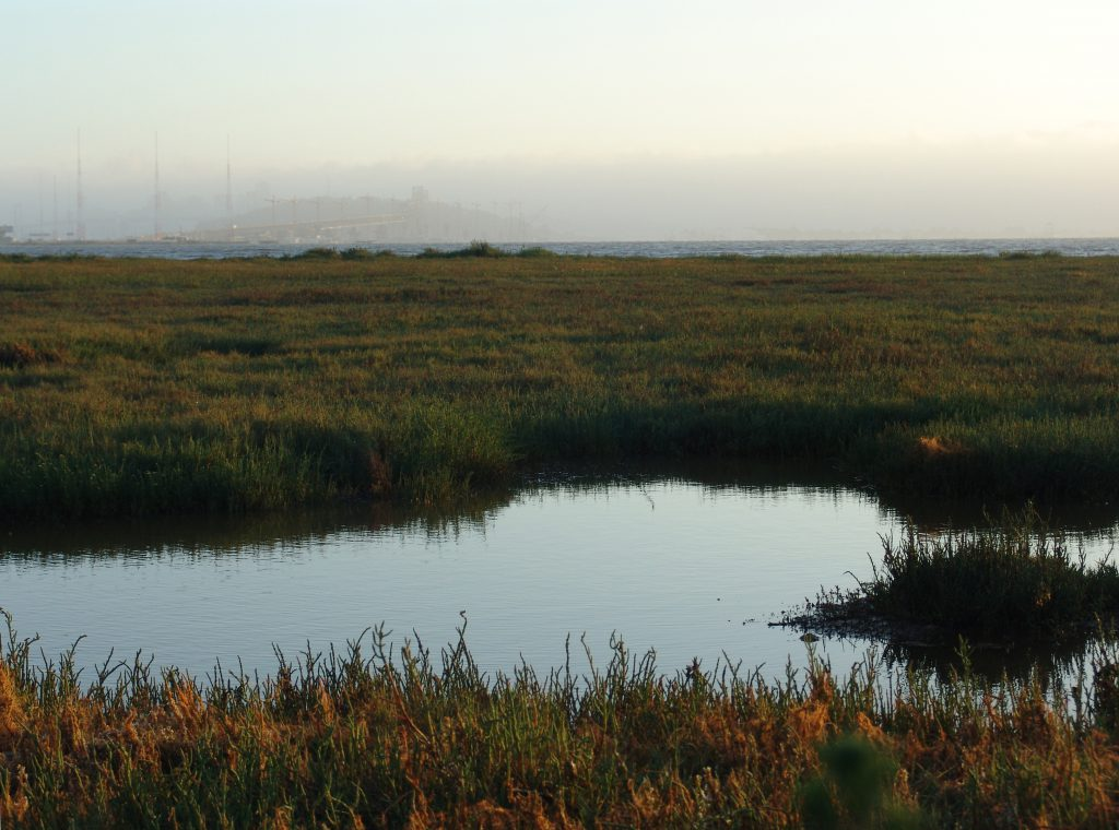 The Emeryville mudflats with San Francisco in the distance.