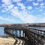 Dock in Tomales Bay