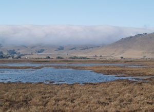 Suisun marsh with a mountain in the background and fog rolling in.